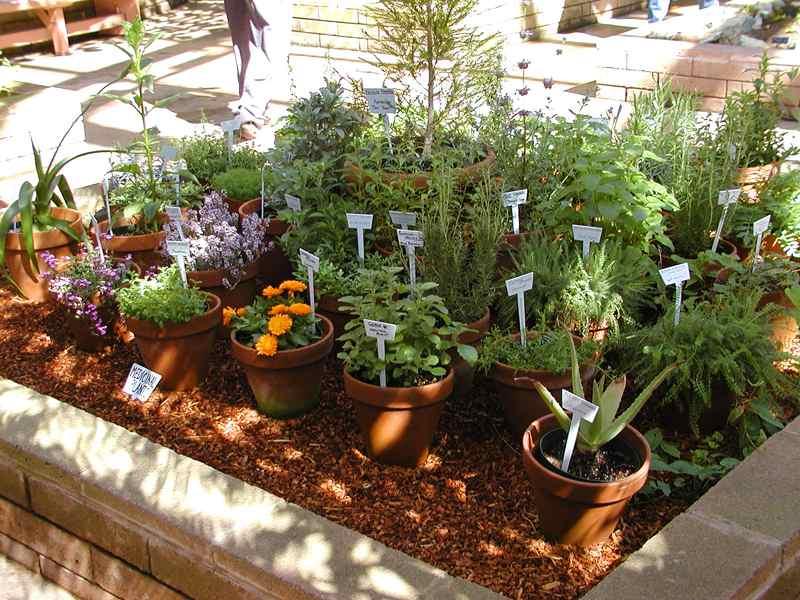Herbs by John Sullivan
